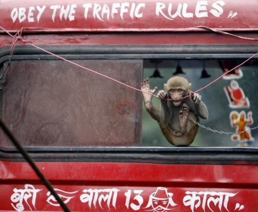 印度的IT大计划遭遇限电、拥挤和猴子
