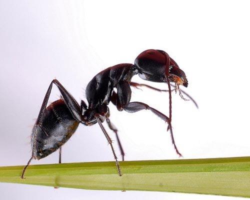 揭示蚂蚁亿年进化之路 曾与恐龙同时代生存