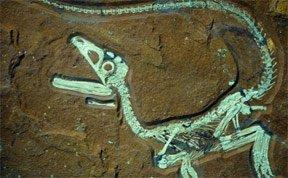 德国发现史上最完整肉食恐龙化石