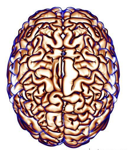 百万处理器组超级系统 模拟十亿脑细胞活动