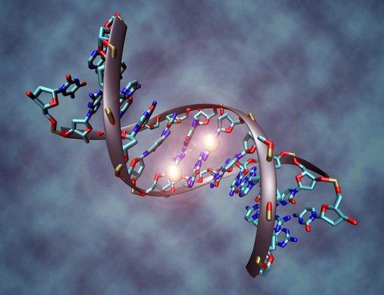 30天测序100位百岁老人 揭开长寿基因秘密