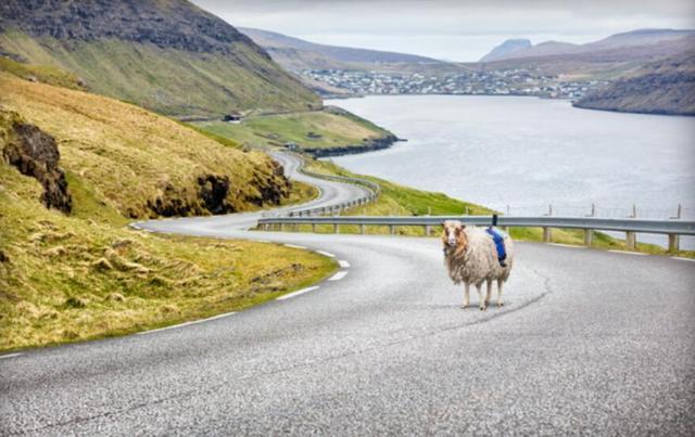羊身上绑相机 谷歌街景尝试新视角