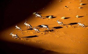 非洲奇景:摄影师实地拍摄野生动物