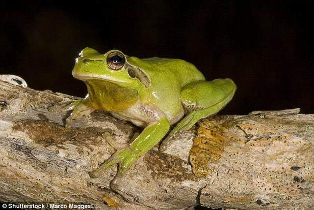 青蛙具有夜间分辨色彩的能力