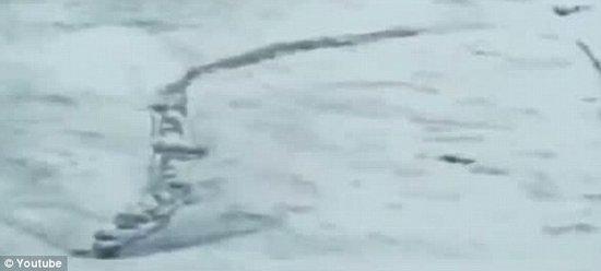 """冰岛发现蛇状生物 堪称""""冰岛版尼斯水怪"""""""