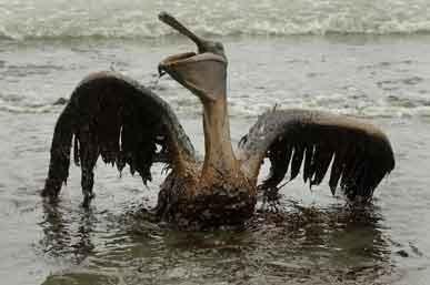美国路易斯安那州海湾遭遇生态灾难