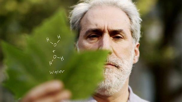 科学家研制人造树叶 可用于生产廉价环保能源