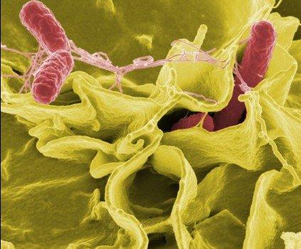 科学家神秘太空细菌实验 致命射线致基因突变