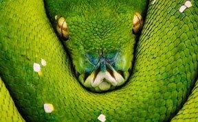 组图:毒蛇演绎致命美丽艺术