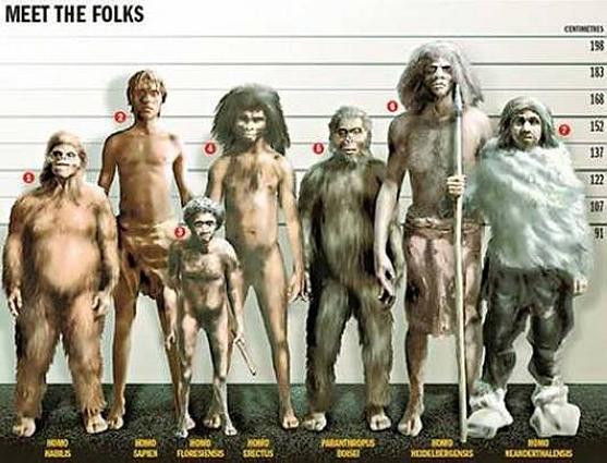 日学者称霍比特人可能由爪哇猿人进化而来