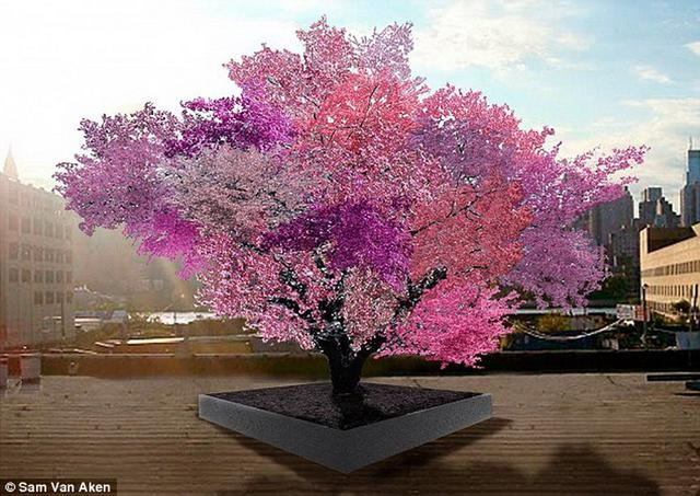"""美国艺术家培育""""魔力树""""能结出40种果实"""