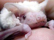 7种罕见白化动物
