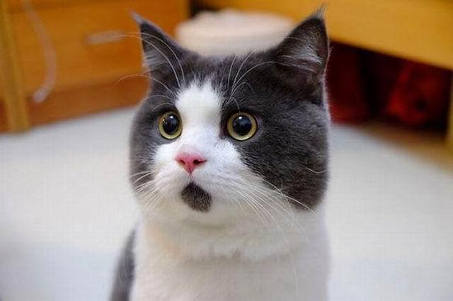外媒:研究发现人类驯化猫或有上万年历史