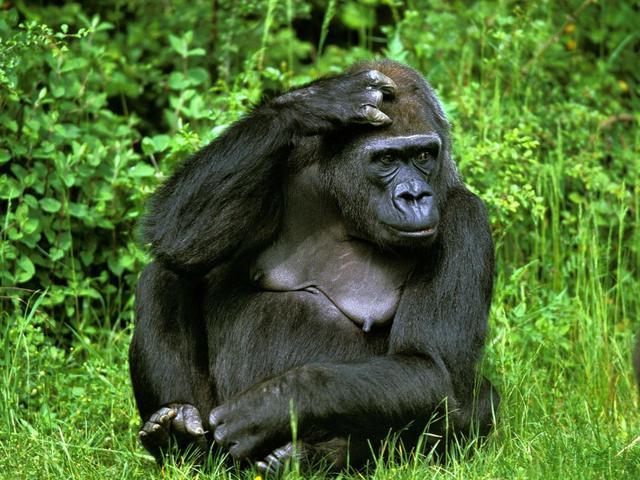 全球七百多物种濒危 气候变化为幕后黑手