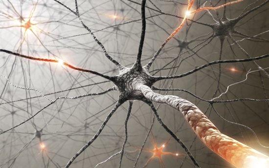 研究人员成功在老鼠身上验证神经元改编技术