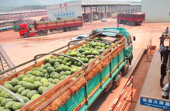 农产品电商带动跨境贸易:缅甸南瓜如何入华?