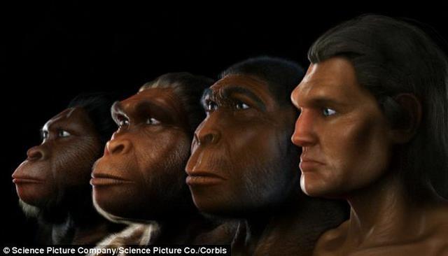 人类进化趋向身体变小脑袋变大