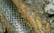 云南发现距今2.5亿年的鳞木化石