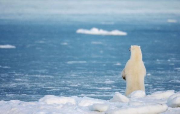 2月全球气温升幅史无前例 气候危机再拉警报