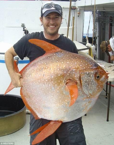 全球首现恒温鱼类:靠拍打鱼鳍加热血液