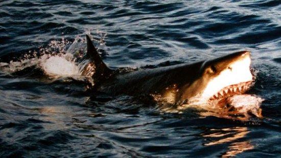 科学家称650万年前条纹鲨演变成现代大白鲨