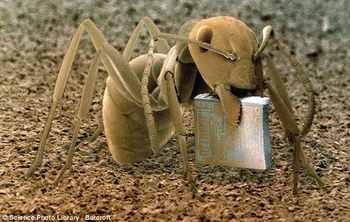 电子显微镜下的微观世界 木蚁酷似外星生物
