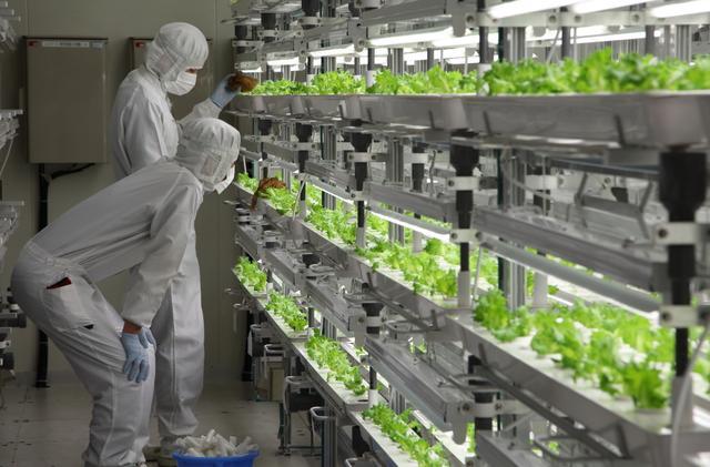 电子业衰落 日本科技公司改种菜