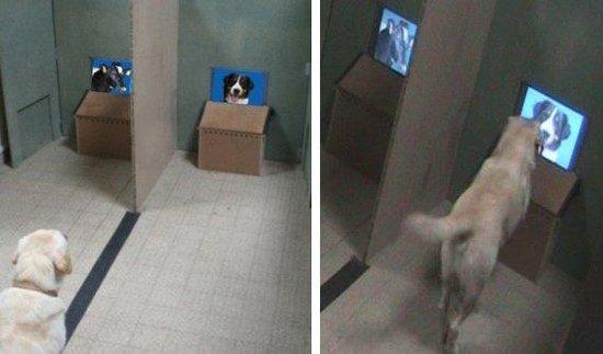 """研究发现狗具有""""面部识别""""同类的能力"""