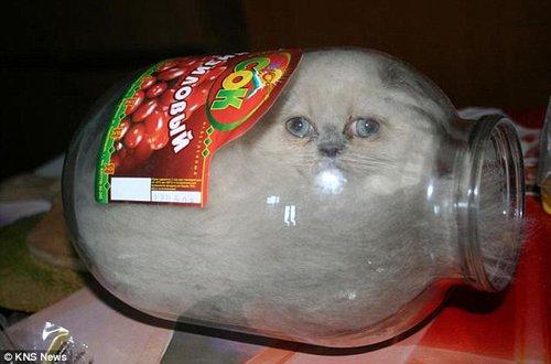 俄小猫嗜好独特 爱钻玻璃罐子众人称奇(图)