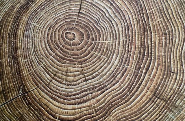 """树木年轮是一本记录气候变化的""""历史书"""""""