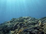"""气候变化会使海洋""""缺氧""""产生更多""""死亡地带"""""""
