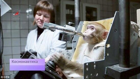 俄将在猴子身上检验宇宙辐射影响
