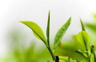 专家利用X射线可看到植物光合作用分子结构