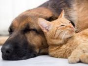 萌死了:抓拍动物们憨态可掬的各种睡姿