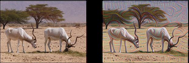 制造幻景:谷歌圖像識別神經網絡讓人大跌眼鏡