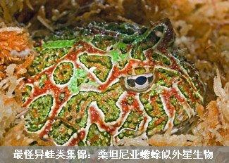 全球最怪异蛙类集锦