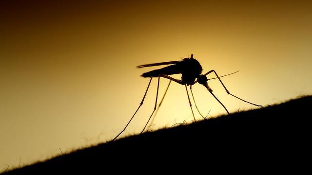 逆天! 谷歌子公司欲用人工智能技术消灭蚊子