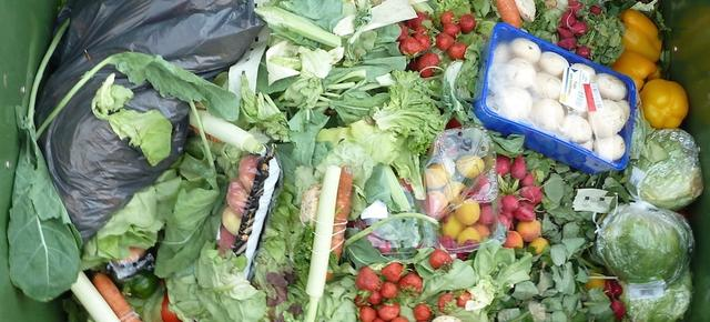 你还在浪费食物?小心政府给你开罚单!