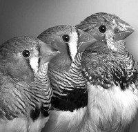 """鸟类也看""""手相"""" 细胞端粒长活得久得验证"""