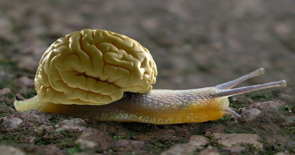 难以置信:蜗牛依靠两颗脑细胞做决定