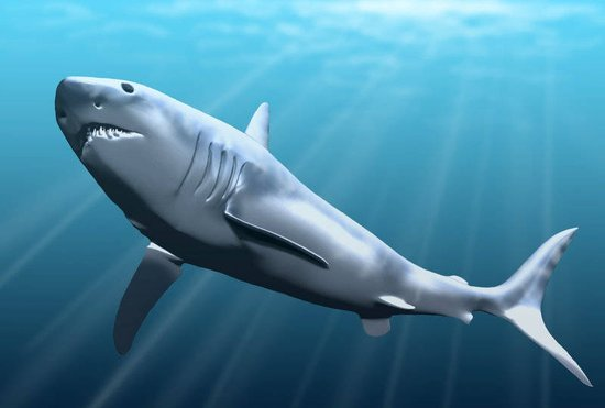 """美国生物学家发现人类进化自""""史前鲨鱼"""""""