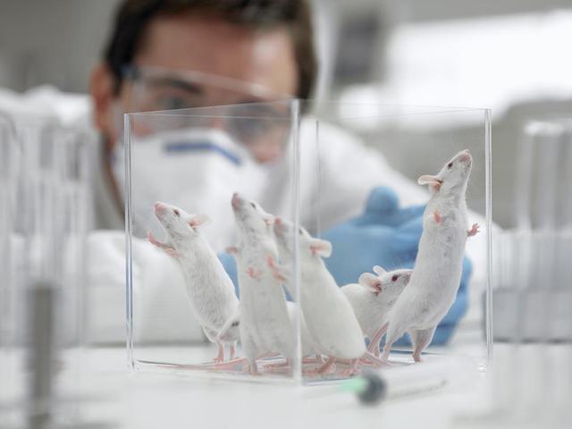 科学家发现能延缓老鼠衰老的天然化合物
