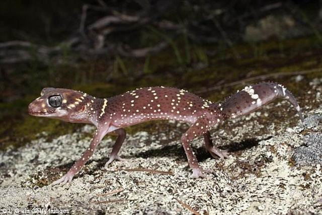 3500万年前澳大利亚出现物种大灭绝