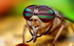 """动物们奇怪吃饭方式:苍蝇吃前先""""吐"""""""