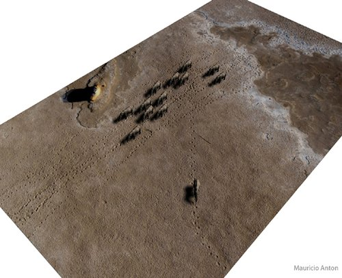 阿联酋发现700万年前象群足迹化石(图)