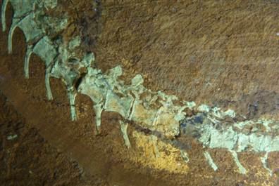 科学家首次发现与鸟类亲缘较远的带羽毛恐龙