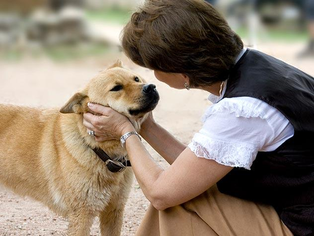 研究表明狗狗确实能听懂人说话