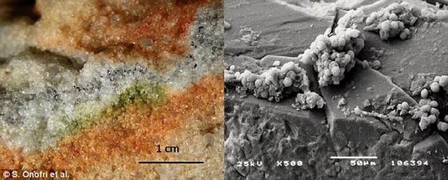 真菌在太空存活18个月!暗示火星可能有生命