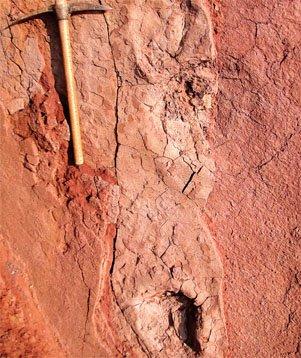 恐龙足迹化石