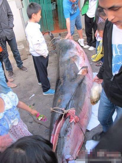 山东工商学院食堂卖鲸鱼肉 味道酸酸涩涩_科技
